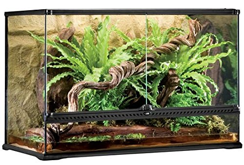Exo Terra All Glass Terrarium