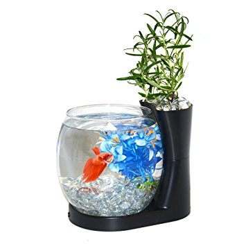 Elive Double Bowl Aquarium Kit with Betta Aquarium and Fish Tank