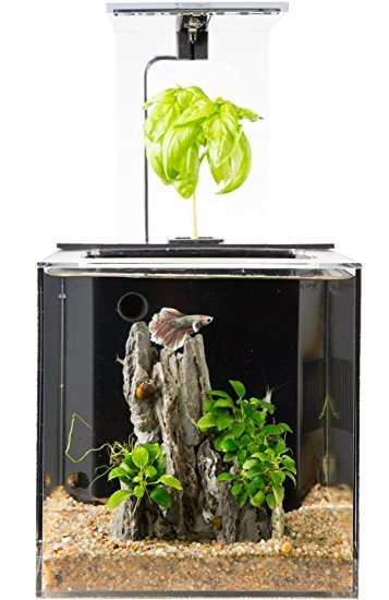 EcoQubeC Desktop Betta Fish Tank